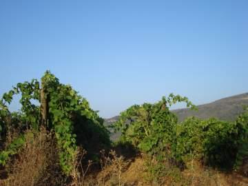 Domaine de Mayrac agriculture biologique production de vin haute qualité
