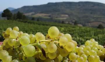Domaine de Mayrac exploitation viticole